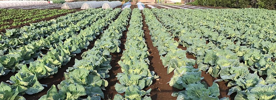 東京ブログ。世田谷で野菜づくりの日々。